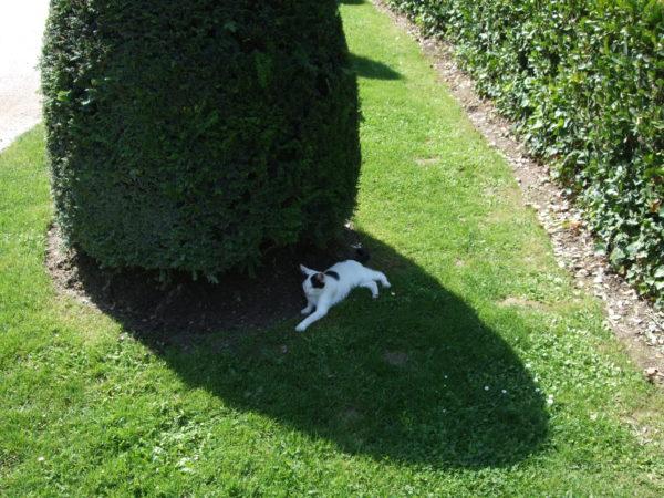 クロ・リュセの館庭の猫