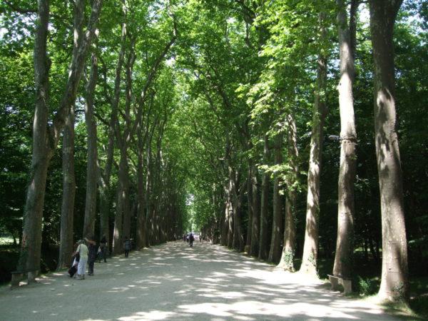 シュノンソー城への並木道